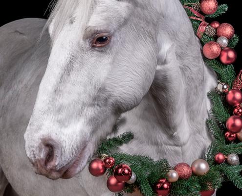 Snowy_Weihnachtspony