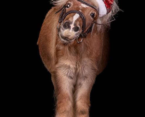 weihnachtsshooting_pony_kerpen