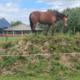 pferd_hoch-hinaus